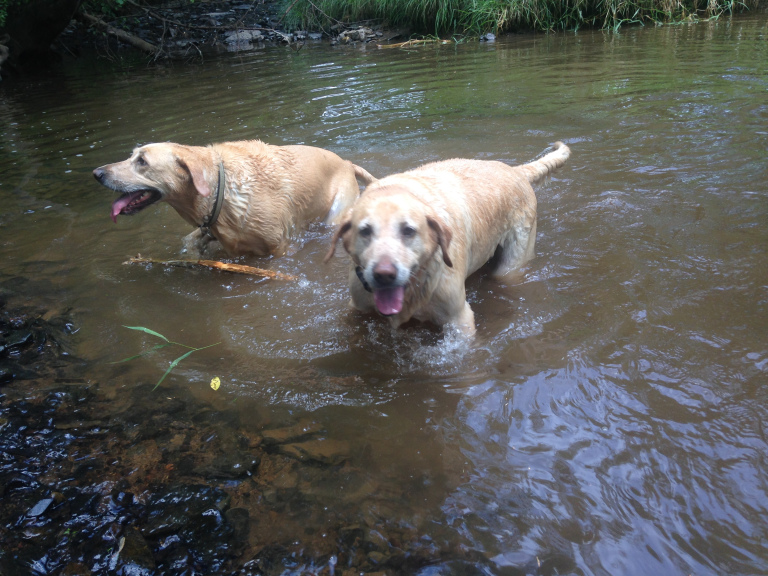 Koko & Karma enjoying an afternoon in their favorite swimming hole