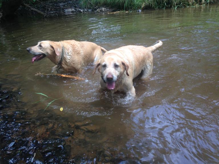Koko & Karma enjoying an afternoon in their favorite swimming hole