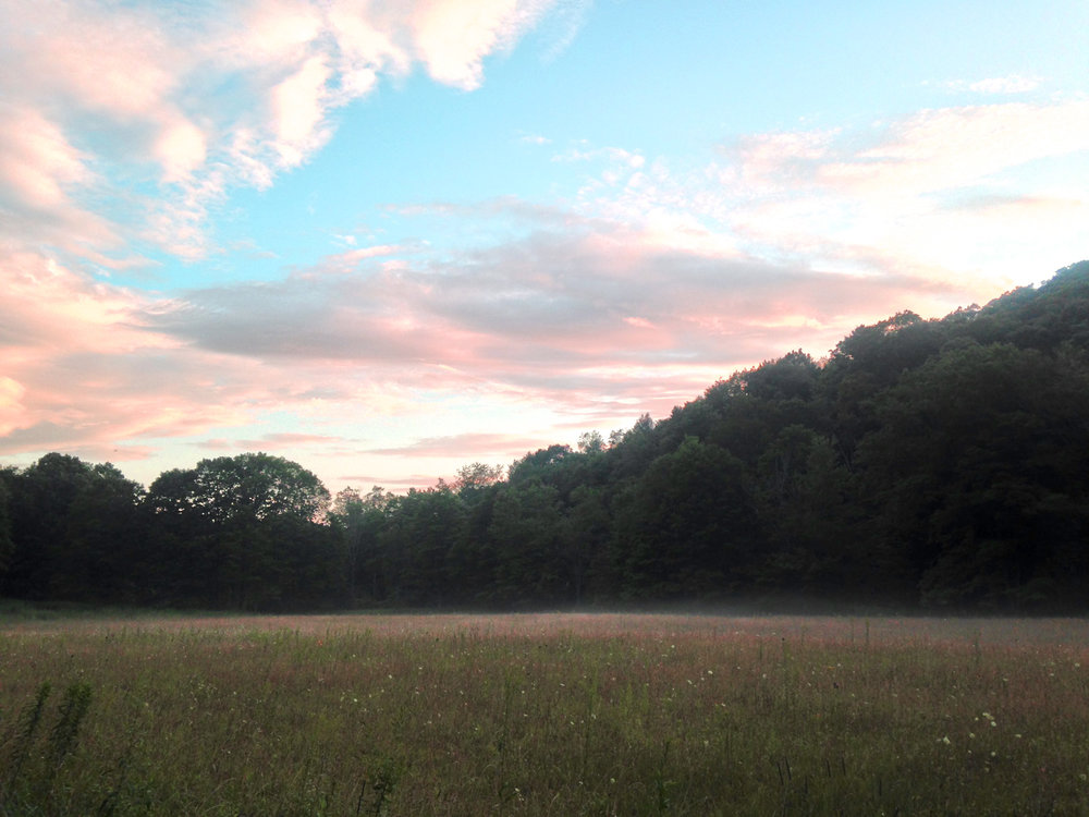 A field at SRL on a summer evening
