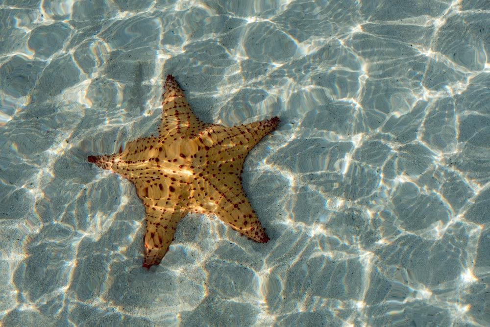 JBI_Starfish.jpg