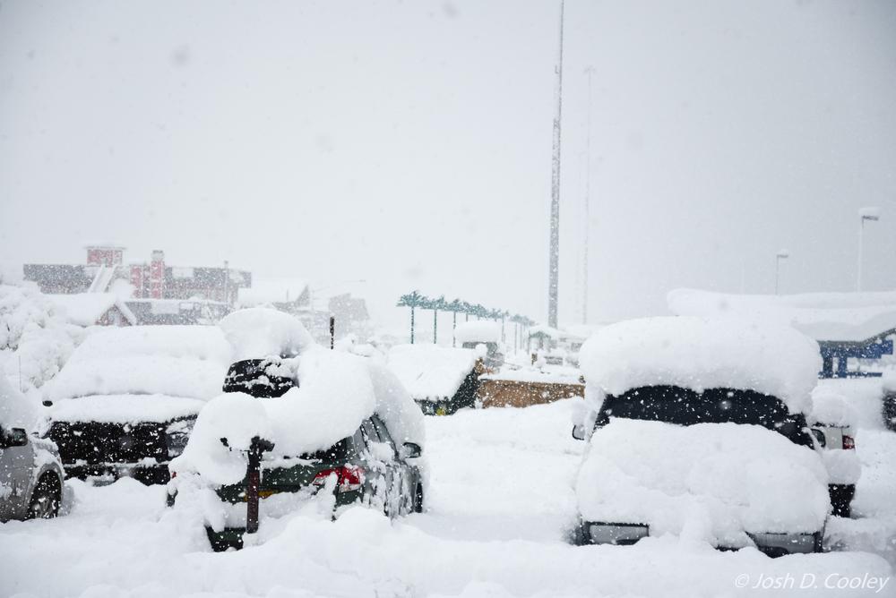 Snowy Valdez.jpg