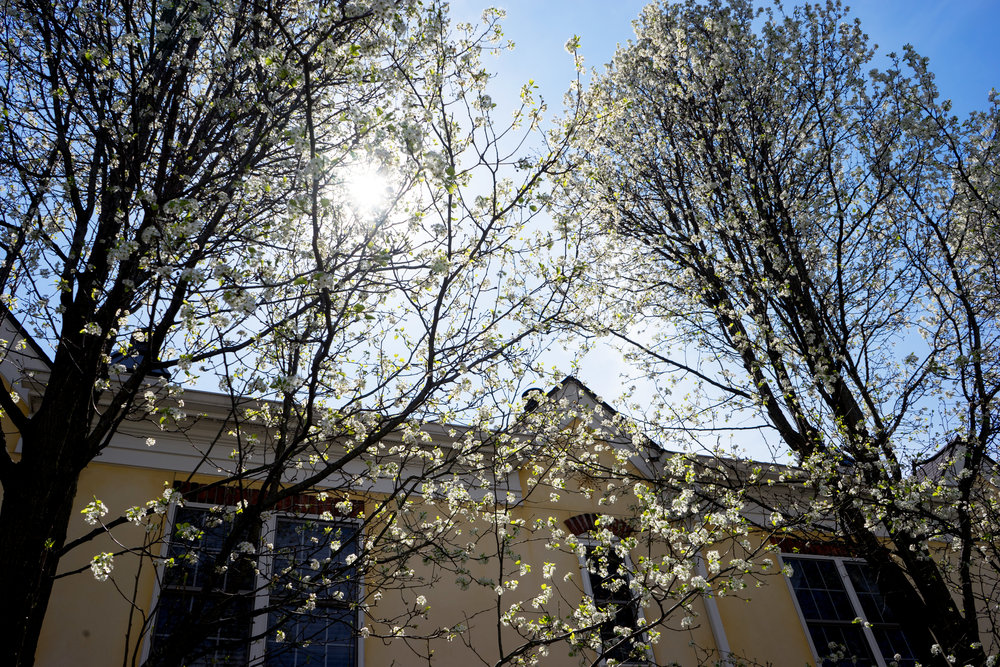 Maggie a la Mode - A Flowery Spring-2.jpg