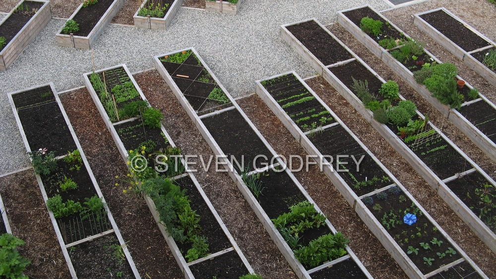 NEU Community Garden, Vancouver, British Columbia, Canada