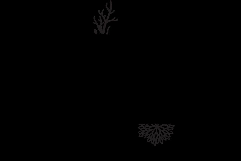Aster Wonders Logo_alt.png