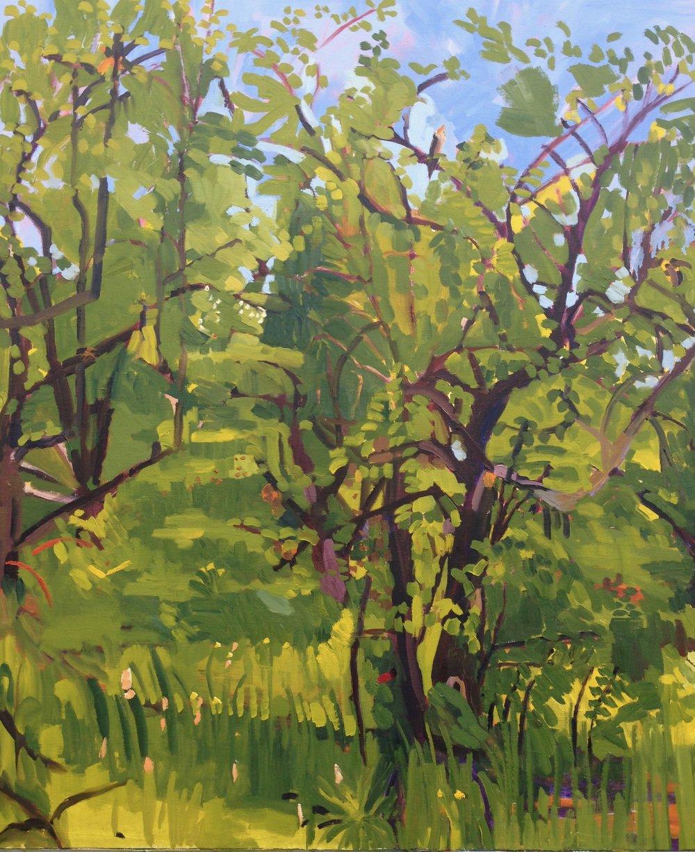 Orchard 3