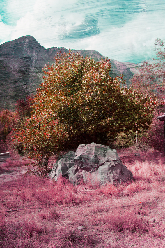 Pink_Rock_sm.jpg