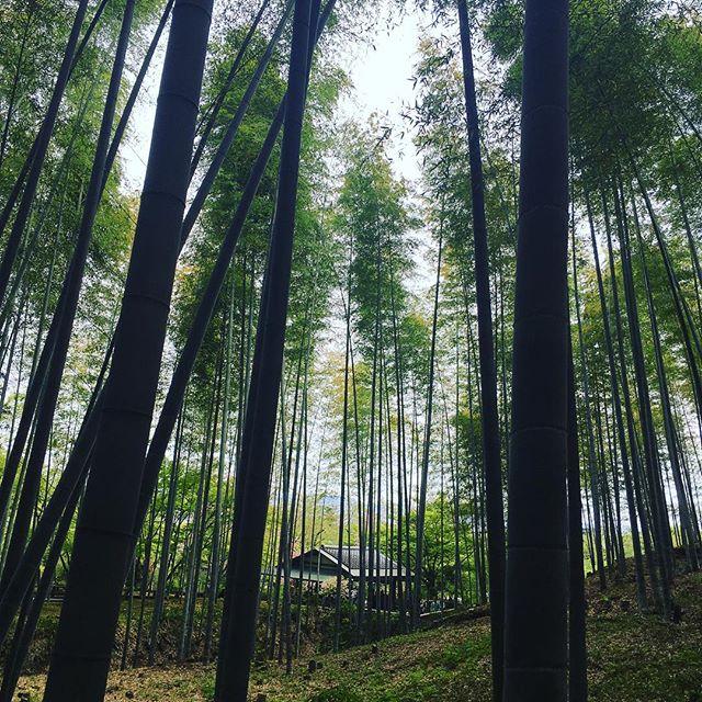 Arashiyama | Endless Bamboo