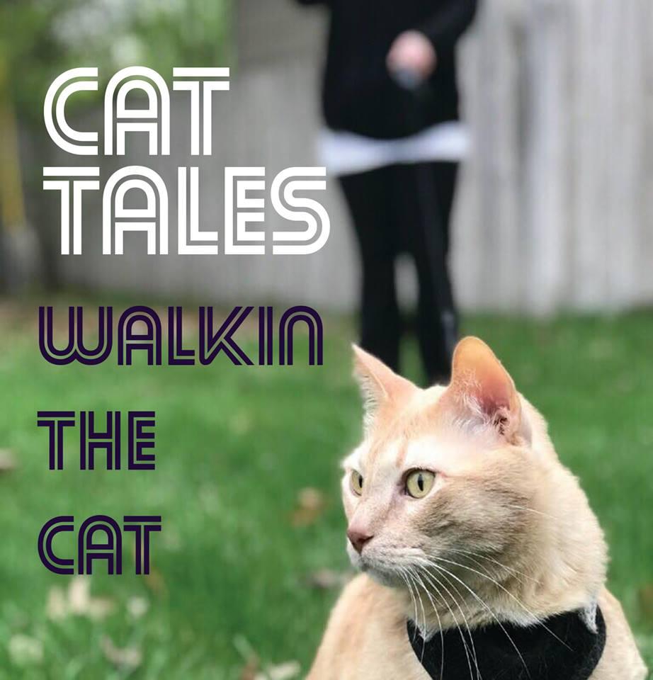 Cat Tales 3-5pm