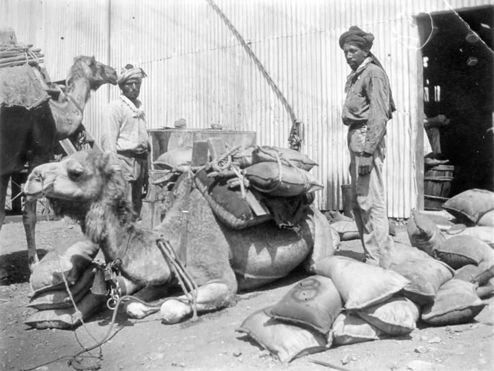 Camels in the Murchison and Coolgardie, 1900.