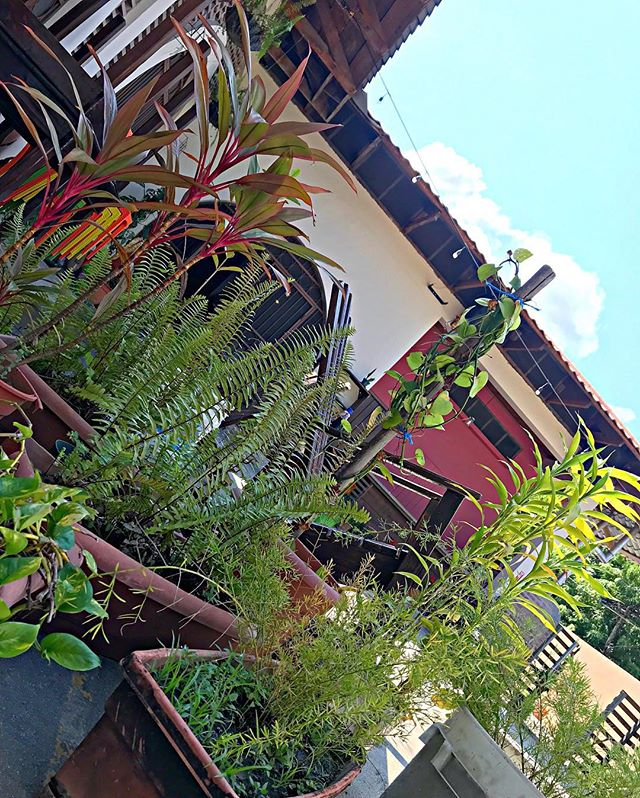 🌿If you like plants, these is your hostel🍃🌱 #green #nature #thenewmadrugada #hostellife #plants #chill #relax
