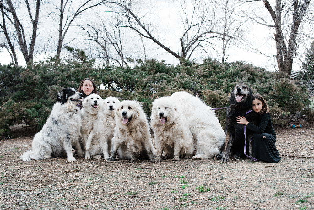 When you try and get seven dogs looking at the camera.