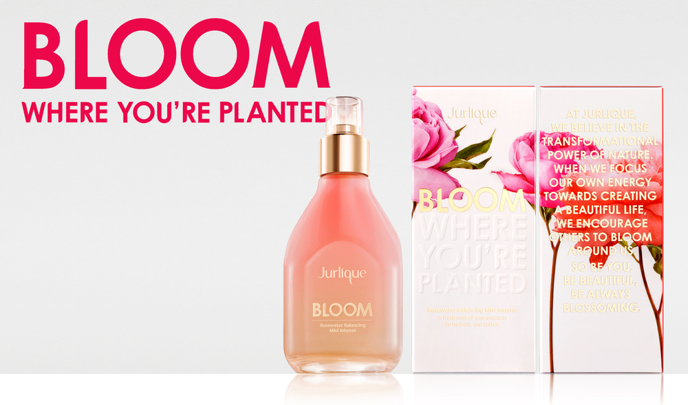 bloom-cartons.jpg