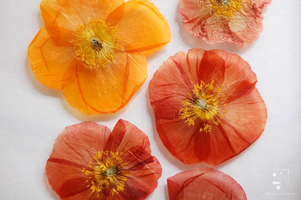 poppy_closeUp_watermark.jpg
