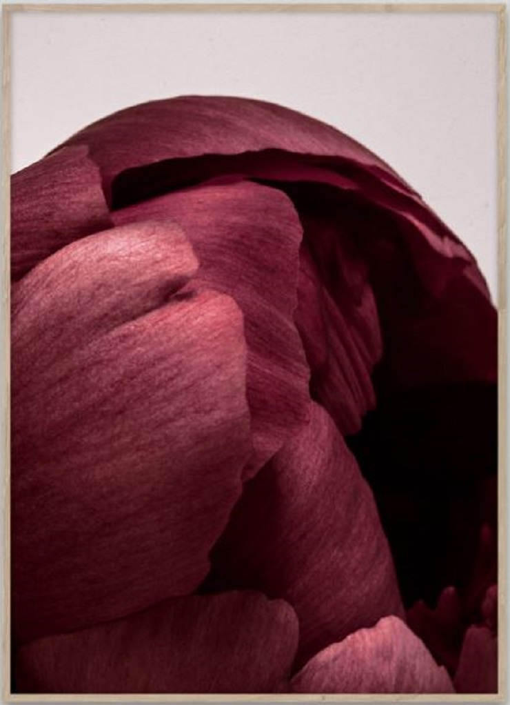 Designstuff Group |  PAPER COLLECTIVE Peonia 01 by NORM ARCHITECTS - $79.00
