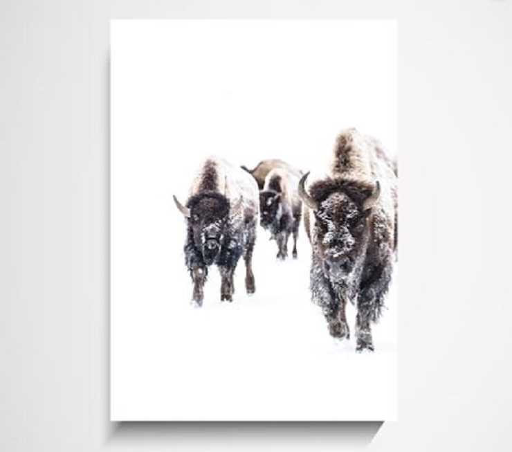 Yorklee Wall Art Prints -  Buffalo wall art print