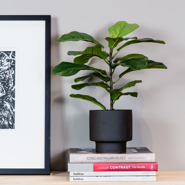 Fiddle+Leaf+Lily+Urban.jpg