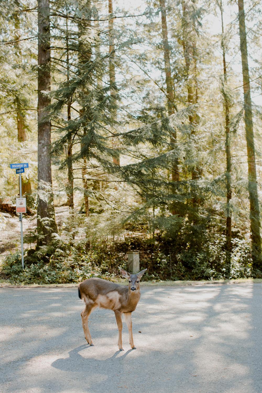 Lake Cushman Wild Deer / Tammie Joske Travel Blog