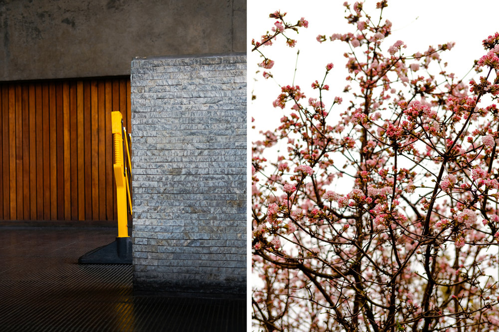 Wall & Flowers.jpg