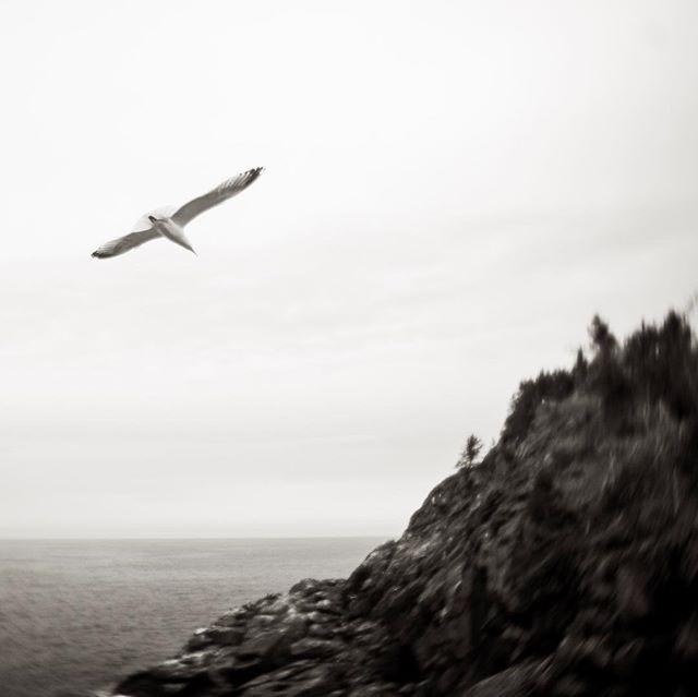 Gull over Mongegan