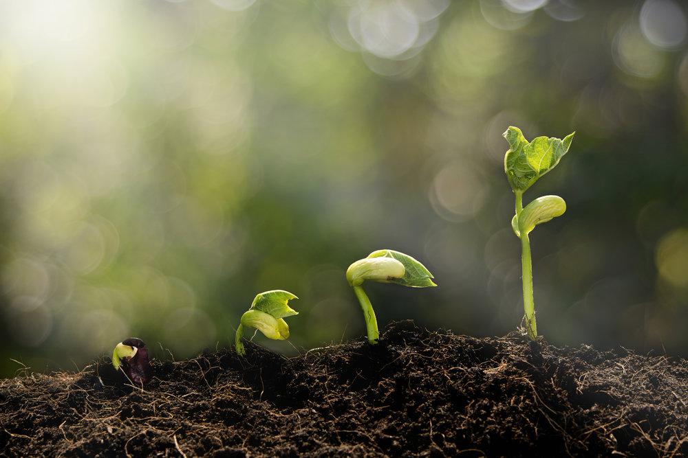 Ne jugez pas chaque jour par la récolte que vous obtenez, mais par les graines que vous plantez.  - Robert Louis Stephenson