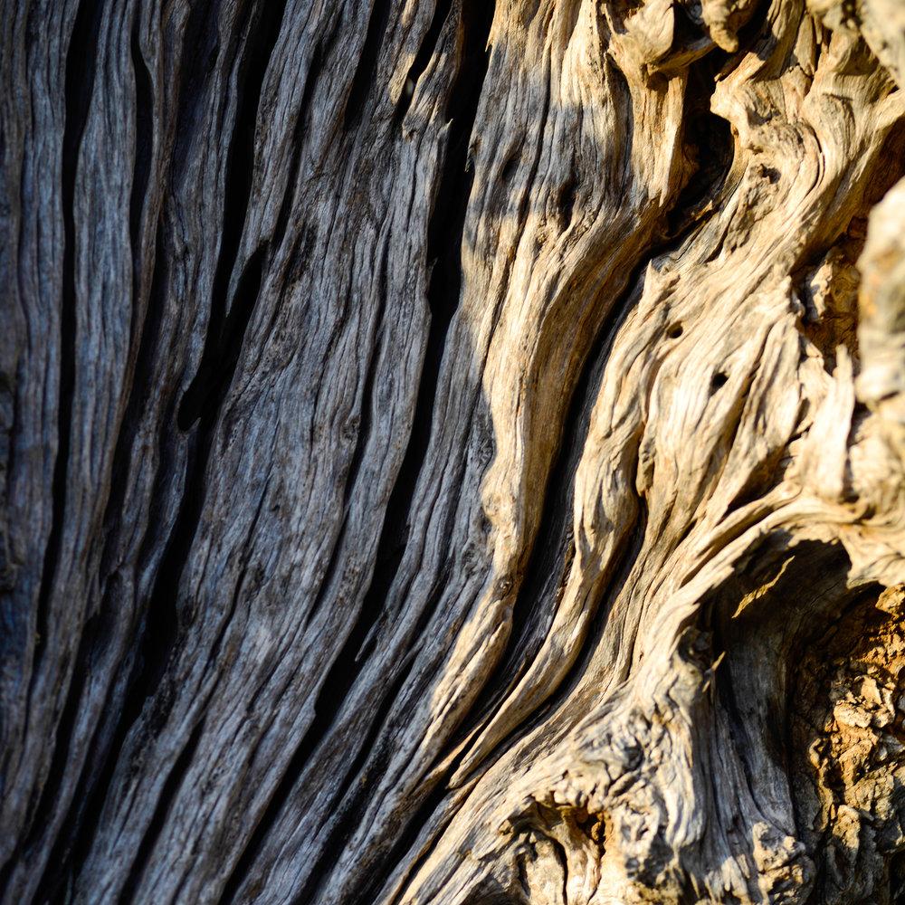 9Olive tree-2.jpg