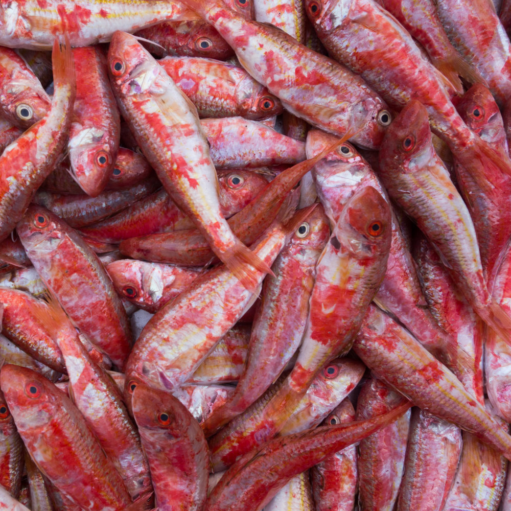 23Fish red-2.jpg