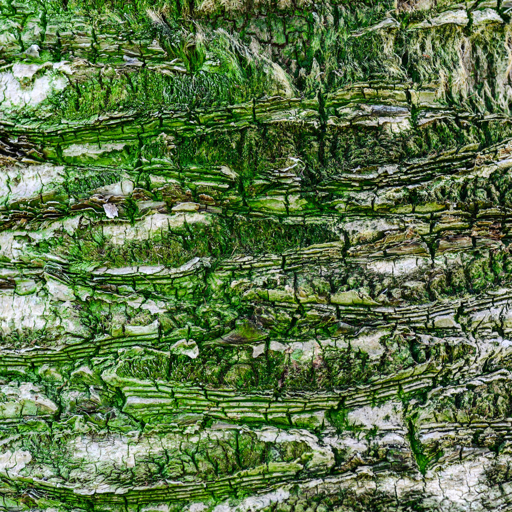 45Palm tree green-2.jpg