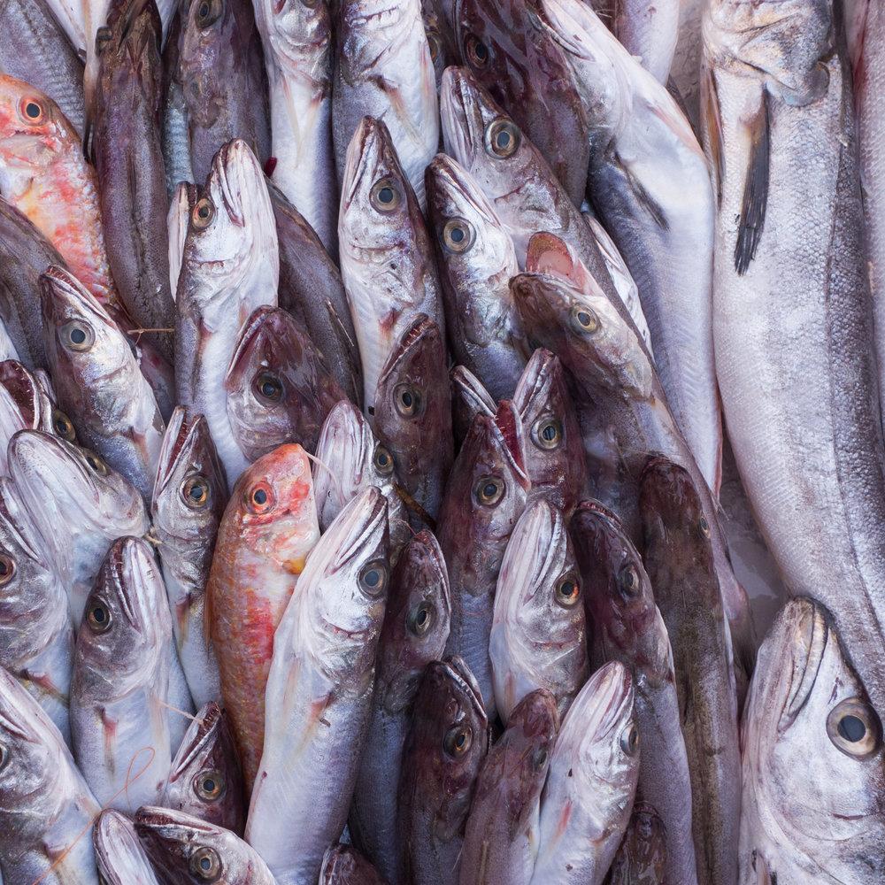 51Sorted fish-2.jpg