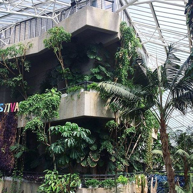 Breathe easy at The conservatory in Barbican, a tropical hidden oasis in the heart of London city! Not only do you get to admire the beautiful tropical plants and trees, there are also exotic fish, birdlife and clever architecture to appreciate. 🌿🐠🕊🌱🌴💓 #love #breatheeasy #barbicantheconservatory #theconseratorylondon #london #greenery #plants