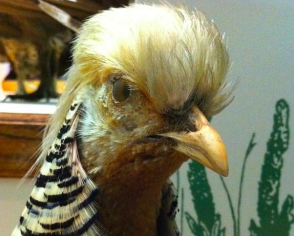 dina hardy transom poetry kill the bird first.jpg