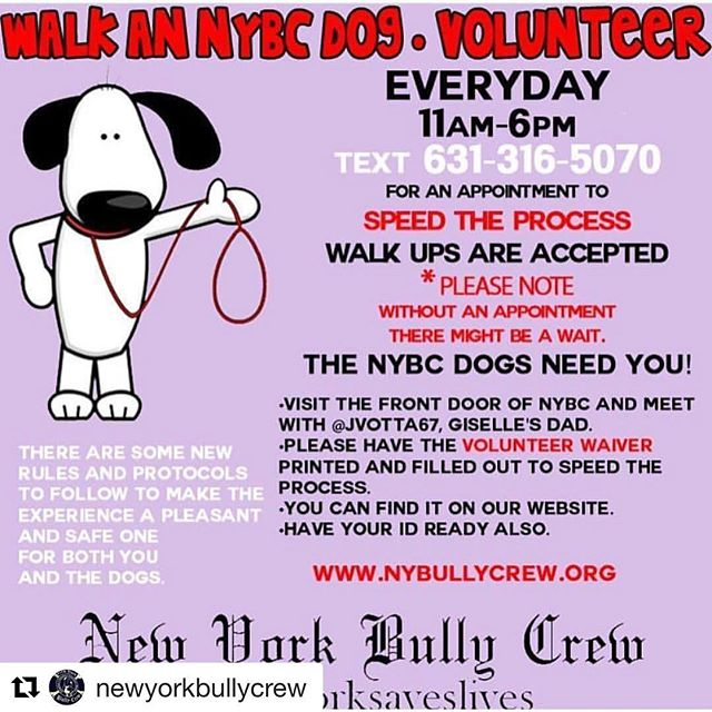 #Repost @newyorkbullycrew (@get_repost) ・・・ COME WALK OUR DOGS 🐾 We are revamping our volunteer program during our upcoming transition and we would like to call upon our All Star volunteers, both regulars and newcomers, to help the dogs of NYBC. Starting today, 11am-6pm, visit the front door of NYBC and meet with @JVotta67, Giselle's Dad. PLEASE TEXT 631-316-5070 for an appointment to speed the process. Keep in mind last walks of the day are at 5:30pm Walk ups are accepted BUT * Please note-without an appointment there might be a wait. Also, please have the Volunteer Waiver printed and filled out to speed the process. You can find it on our website. Have your ID ready also.  www.nybullycrew.org 1457 Montauk Highway Patchogue, NY 11772 *No flip flops. * Please disregard any hours stated on website and phone message. We are currently reformatting and please excuse us. ************ #nybcvolunteers #nybcdogs #wearenewyorkbullycrew #nybc #speakingfortheoneswhocant #teamworksaveslives