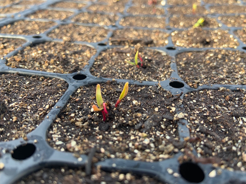 Seedlings getting ready for summer sun