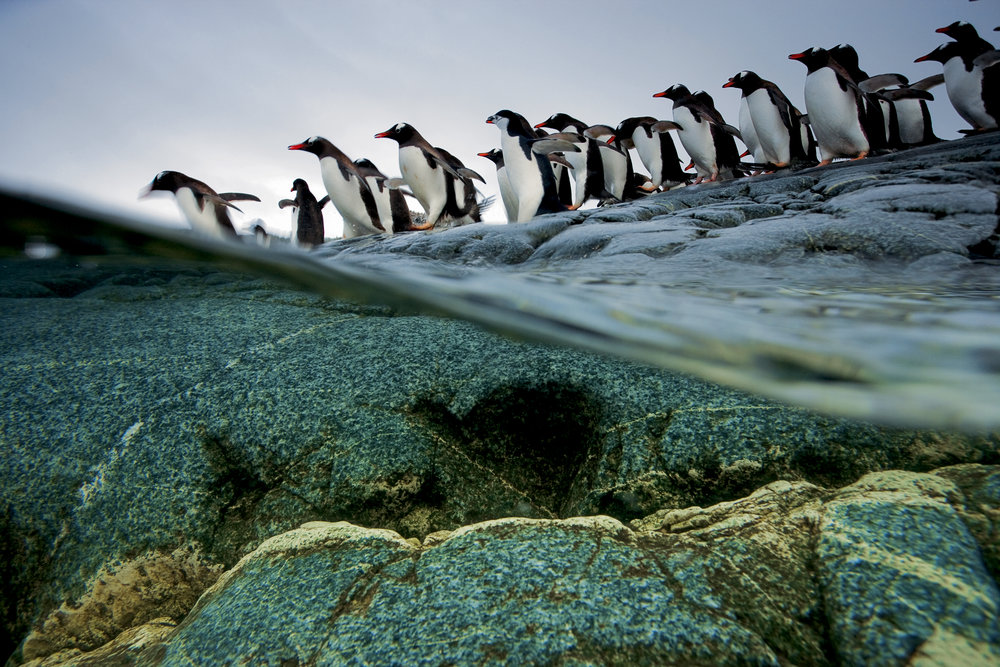 penguins and water_NationalGeographic_1045595.jpg