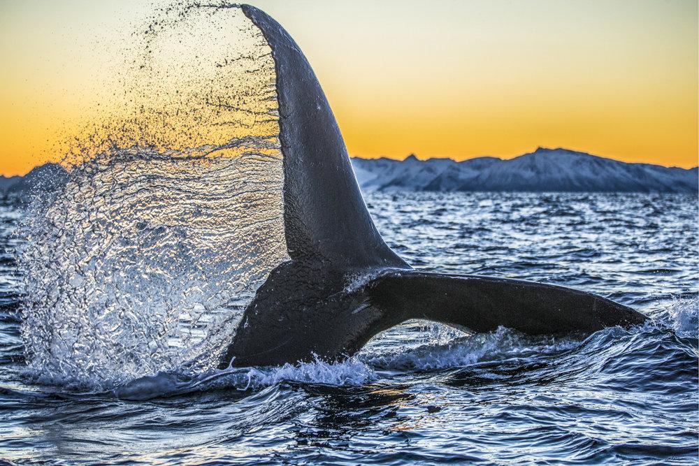 whale tail.jpg