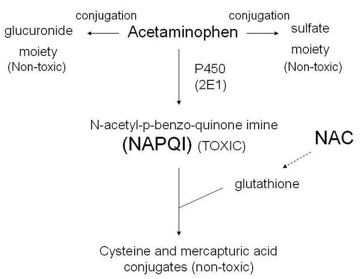 Acmc em conference notes acmc em nac for acetaminophen poisoning fandeluxe Images