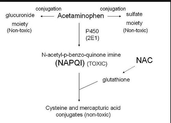 Mechanism of acetaminophen detoxification in the centrilobular region of the liver. NAPQI is the toxic metabolite of acetaminophen. NAC/glutathione detoxifies NAPQI.