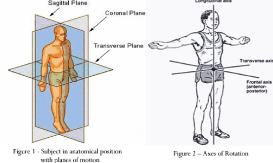 Anatomic Planes and Axes