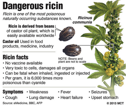 Ricin is a protein that inhibits ribosomes. It is used as a bioterrorism agent. It is dervied from the castor plant.