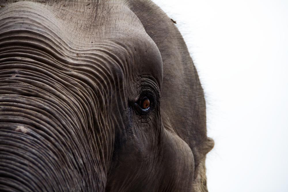 Elephant,-Phnom-Tamao,-Takmao,-Cambodia..png