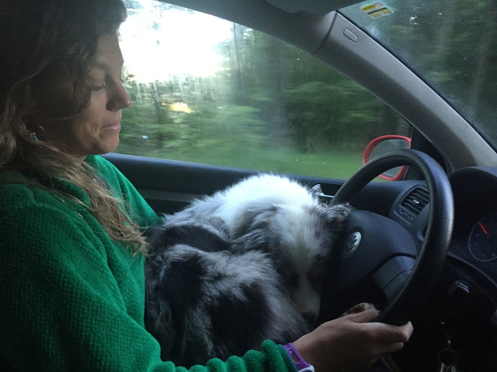 driving with dog in lap - not safe