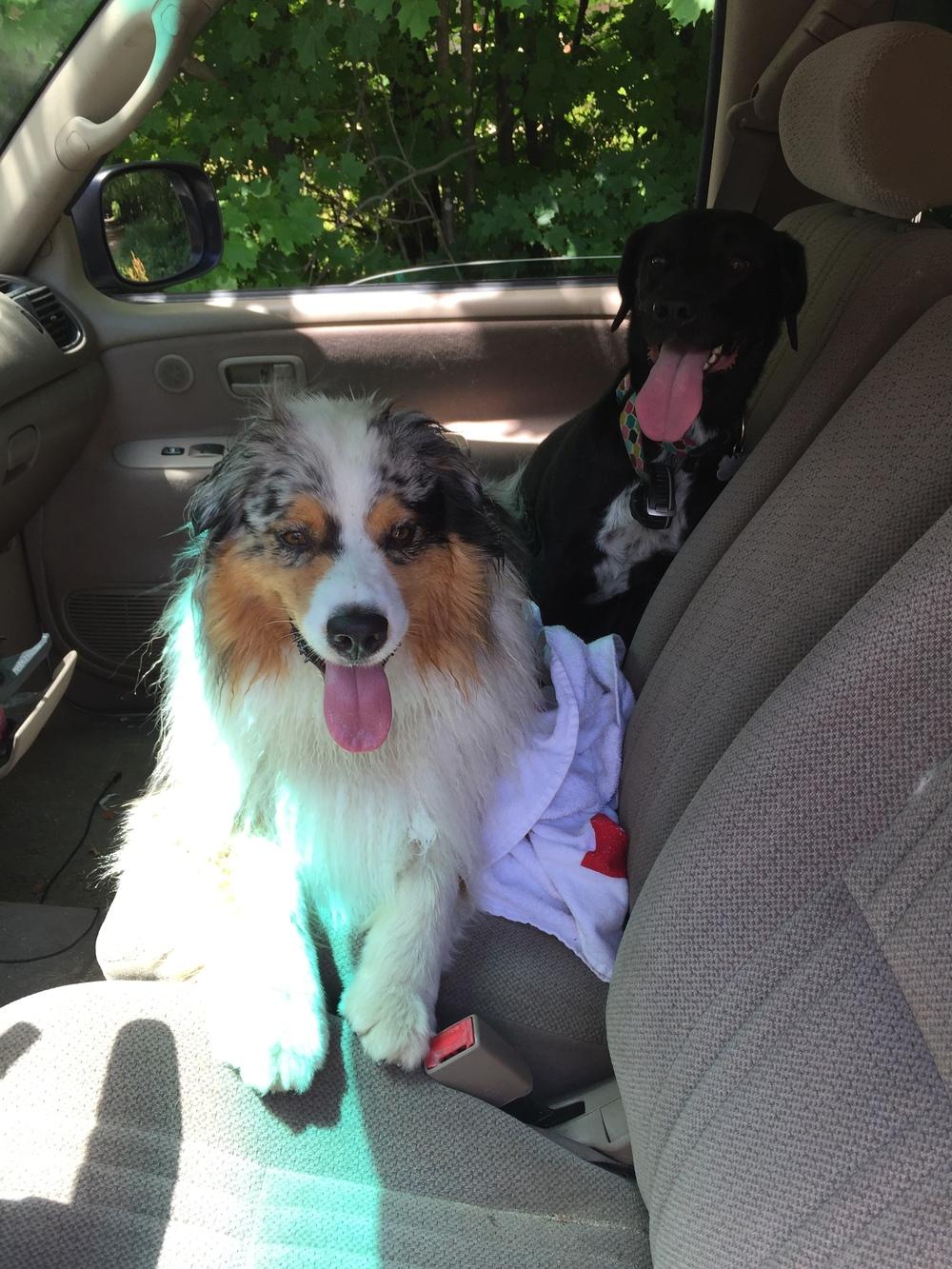 Post-run pups.