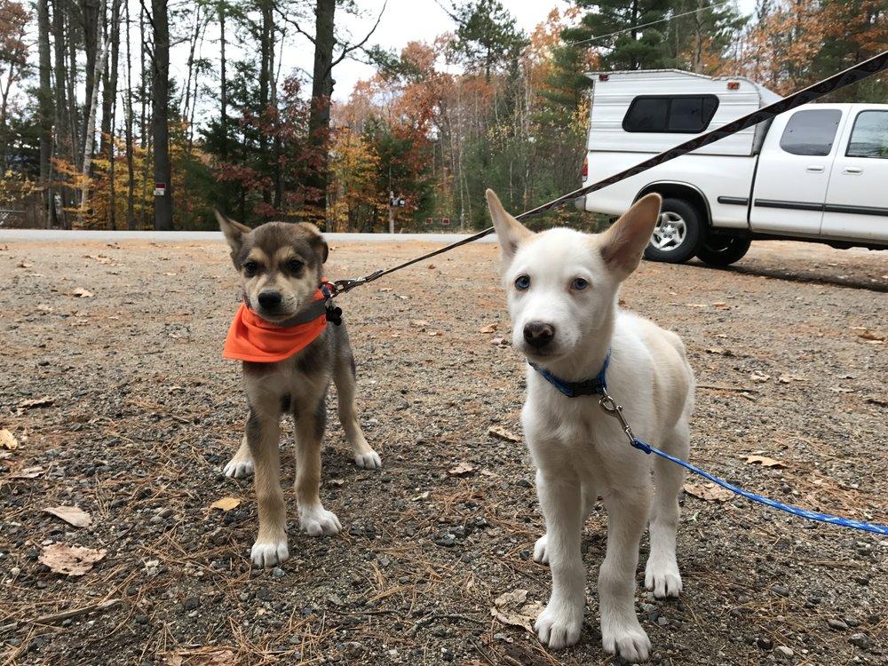 trail pups.JPG