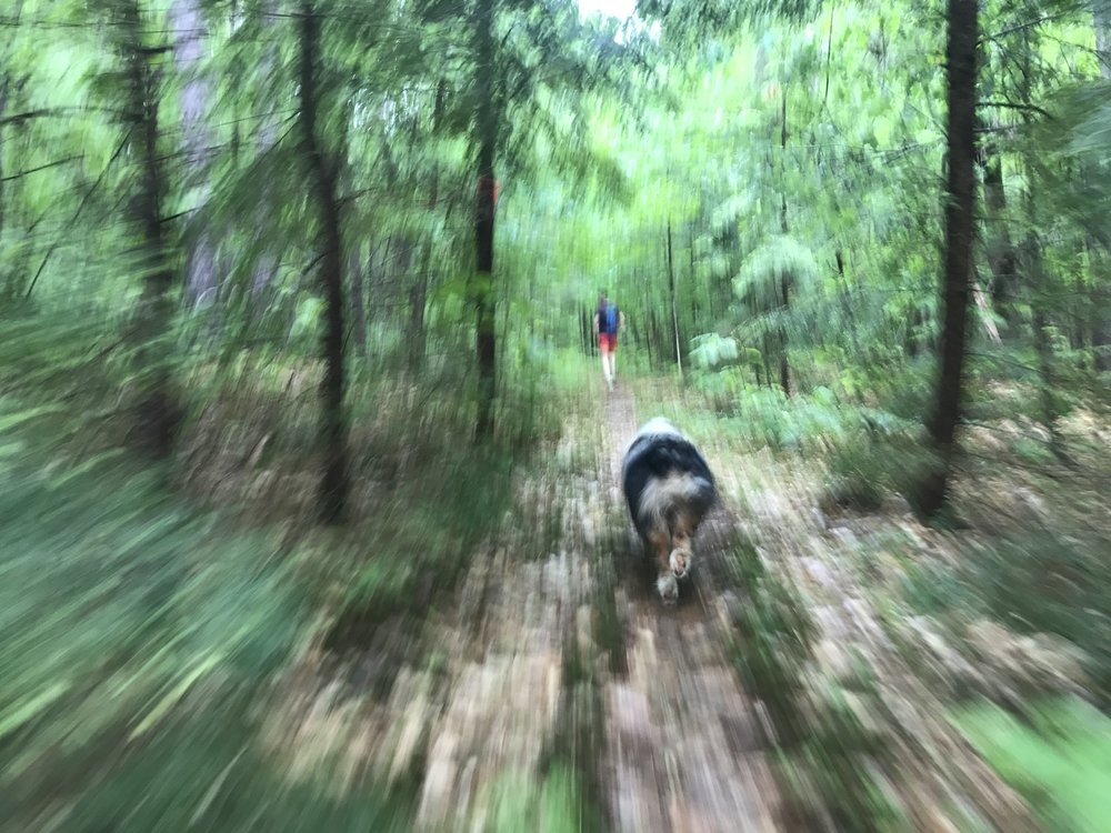 Godwin Town Forest.JPG