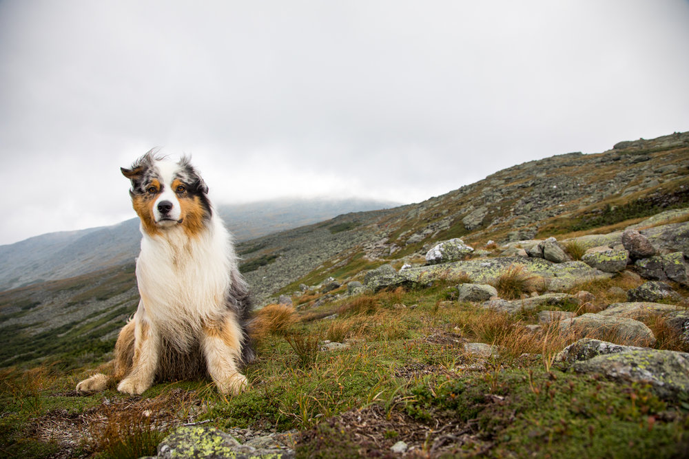 Squall Lakes of the Clouds Australian Shepherd.jpg