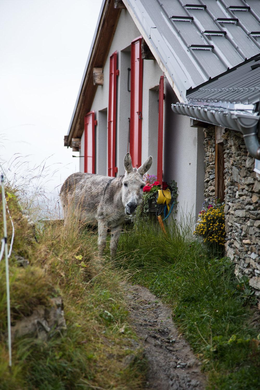 Refuge Du Plan Donkey.jpg