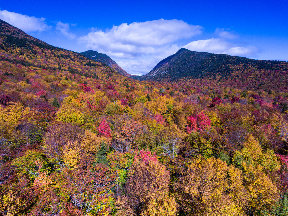 Carrigain Notch NH Foliage.jpg