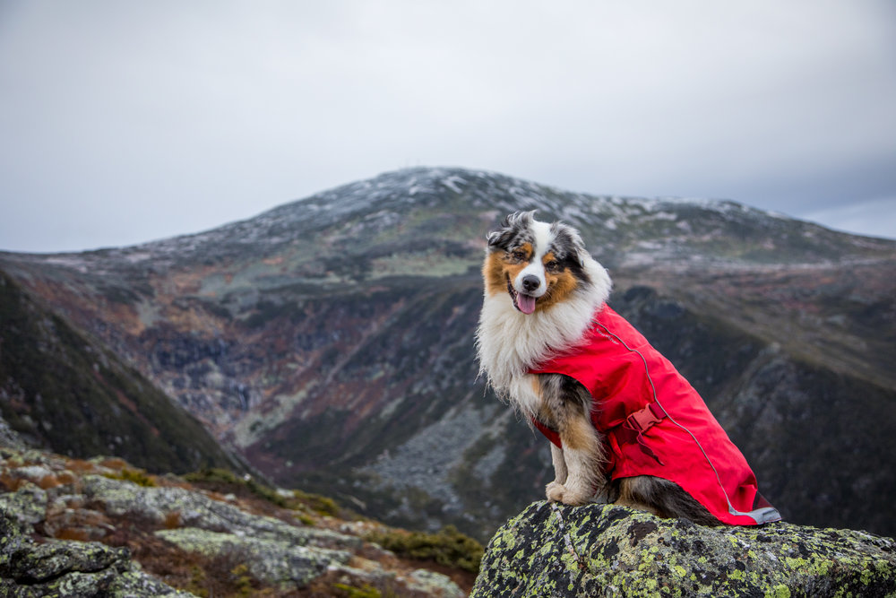 Dogs of Mount Washington.jpg