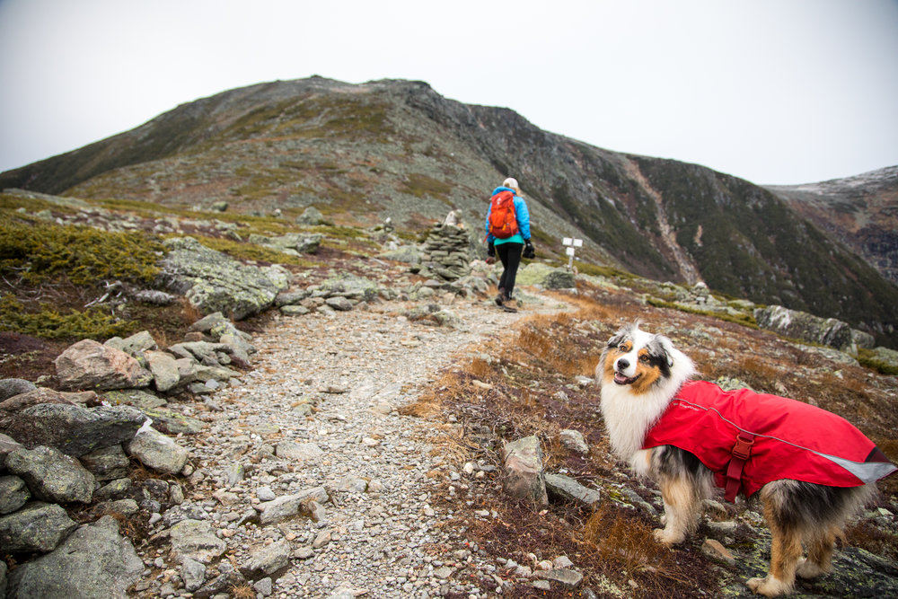 Dogs Hikking White Mountains.jpg