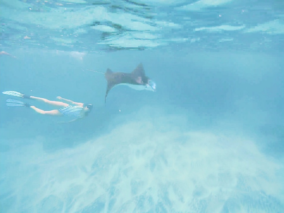 Why You Need to Visit the Nusa Islands - Swimming with Manta Rays