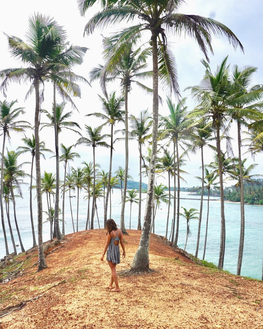 mirissa-palm-tree-dome